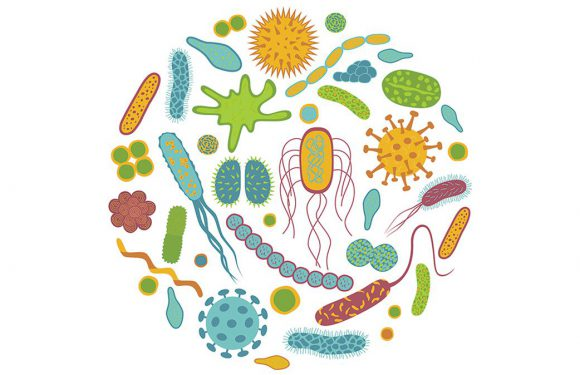 Probiotyki – naturalna odporność
