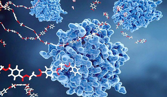 enzymy sklep suplementy