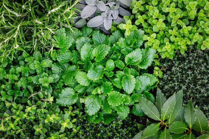 jakie zioła leczą choroby bół itp