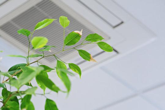 jakość powietrza w domu
