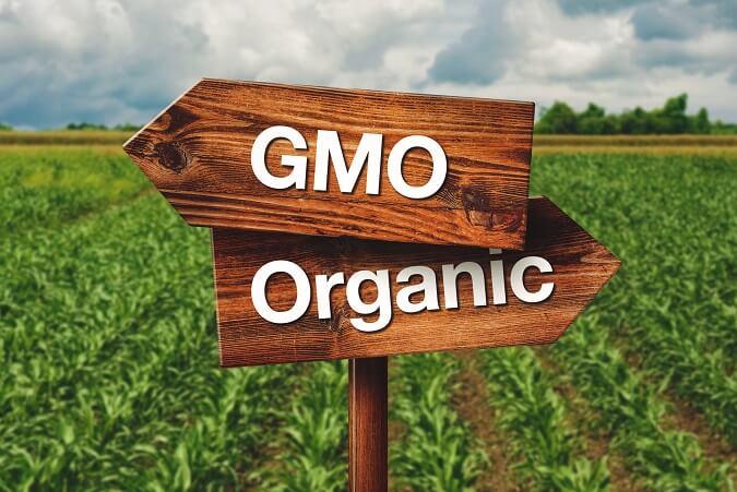 GMO ŻYWNOŚĆ ZDROWA